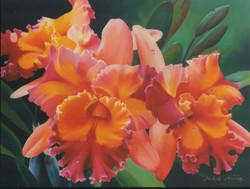 Orquídias (Judith Ibáñez)