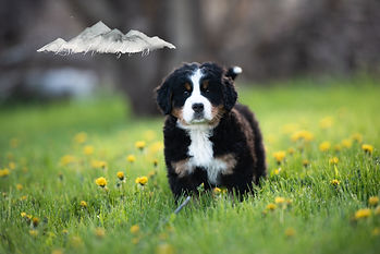 Puppies-6060.jpg