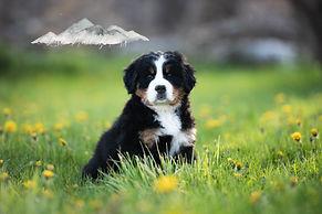 Puppies-6056.jpg