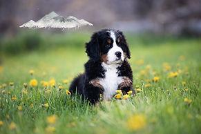 Puppies-6069.jpg