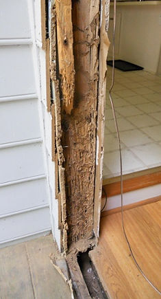 termite-damage-to-home.jpg