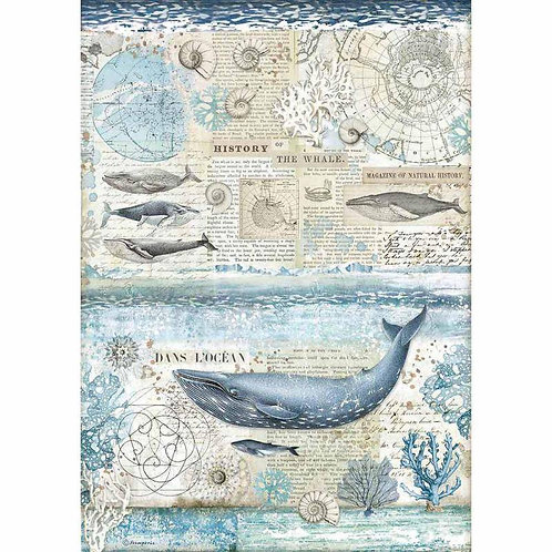A3 - Rice Paper - History Of The Whale