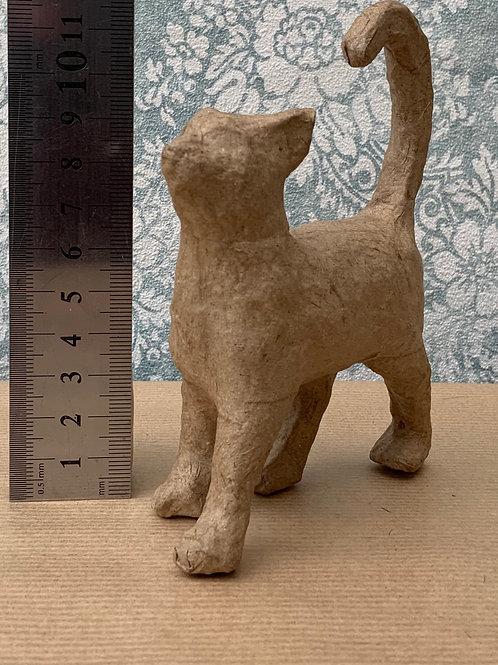 Small ~ Cat