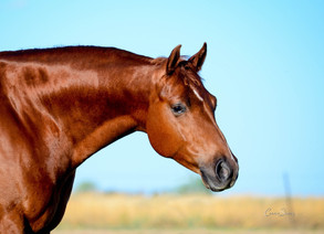 NEWSFLASH - AQHA Region 8