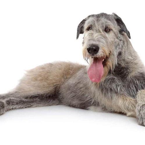 Obří pes od: