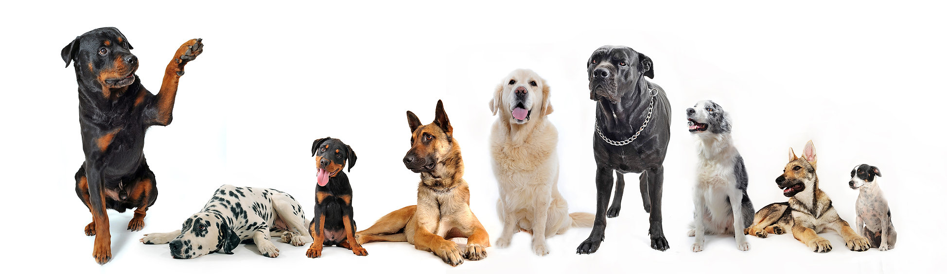 bigstock-group-of-dogs-7620702.jpg