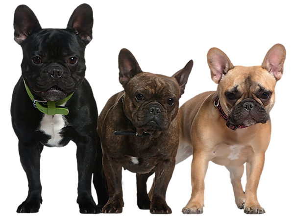 Transparent_Dogs_Picture.png
