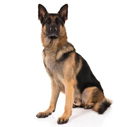 Velký pes od: