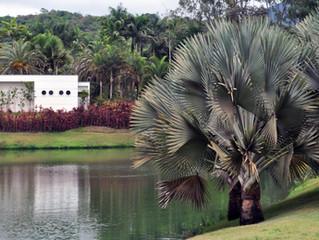 Palmeiras no Paisagismo