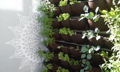 Horta vertical - Ipanema - POA