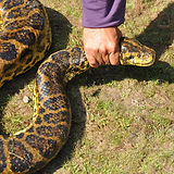 Snake Removal Westchester County, NY