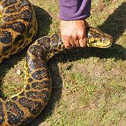 Snake Hold