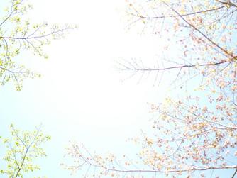 横内香子 写真展 FLORA フローラ