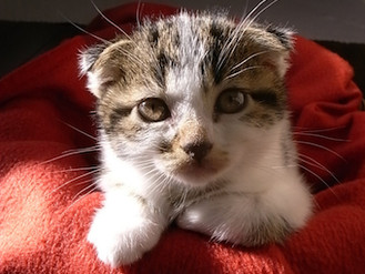 横内香子 個展 うたたね –catnap- 写真
