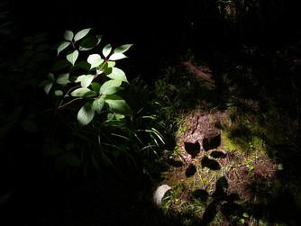 光の記憶(写真グループ展)大人の作品展