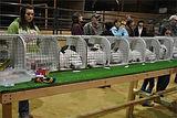 market rabbits.jpg