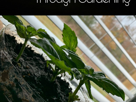 Learning Life Through Gardening