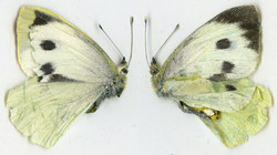 Found - Butterfly