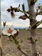 Fleur arbre agroforesterie.jpg