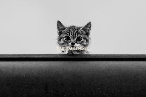 Un lindo gatito en los tejados de Brasov en Rumania
