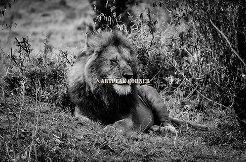 Despertando al León