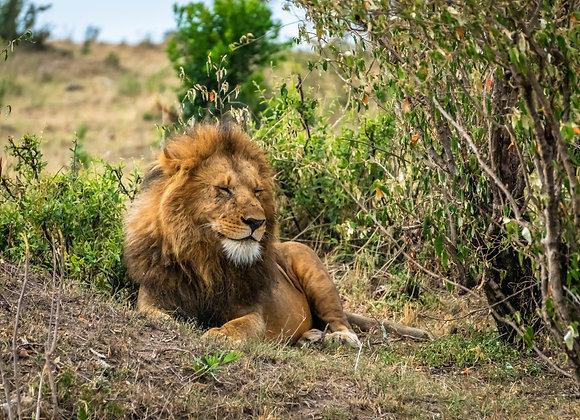 Un Rey disfrutando de la naturaleza