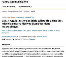 CSF1R  dendritic cells red-pulp macrophages pool size