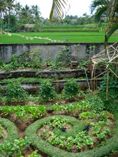 Permaculture_11.jpg
