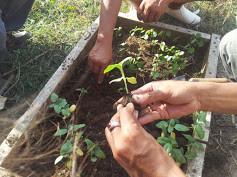 Alam Santi_Taman Petanu Eco Neighborhood