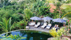 Learn How to Build and Maintain a 100% Chemical Free Bio-Logical Swimming Pool