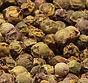 Green Peppercorns from MorningStar Kitchen