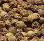 Green Peppercorns from MorningStar Kitch