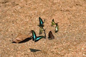 30 Mac 2019 – Selamatkan Ulu Muda, wartakan sebagai Taman Negeri