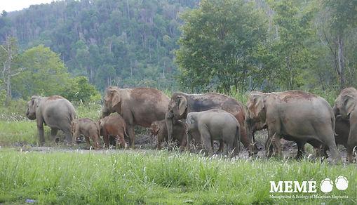 elephant population.jpg