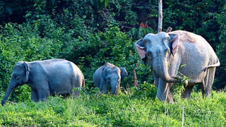 29 Mac 2019 – Ulu Muda Forest Reserve: Fragile nature left unprotected