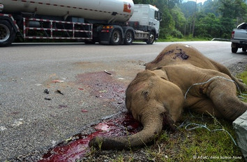 Enforce speed limits to prevent another elephant tragedy