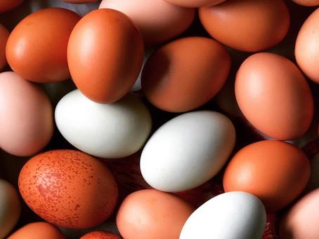 A Beautiful Egg