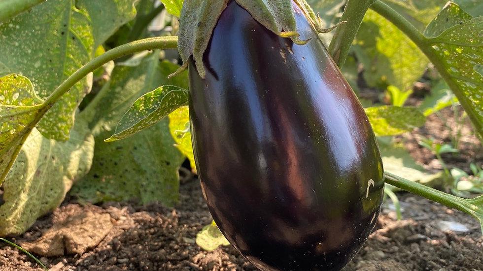 Eggplant 🍆