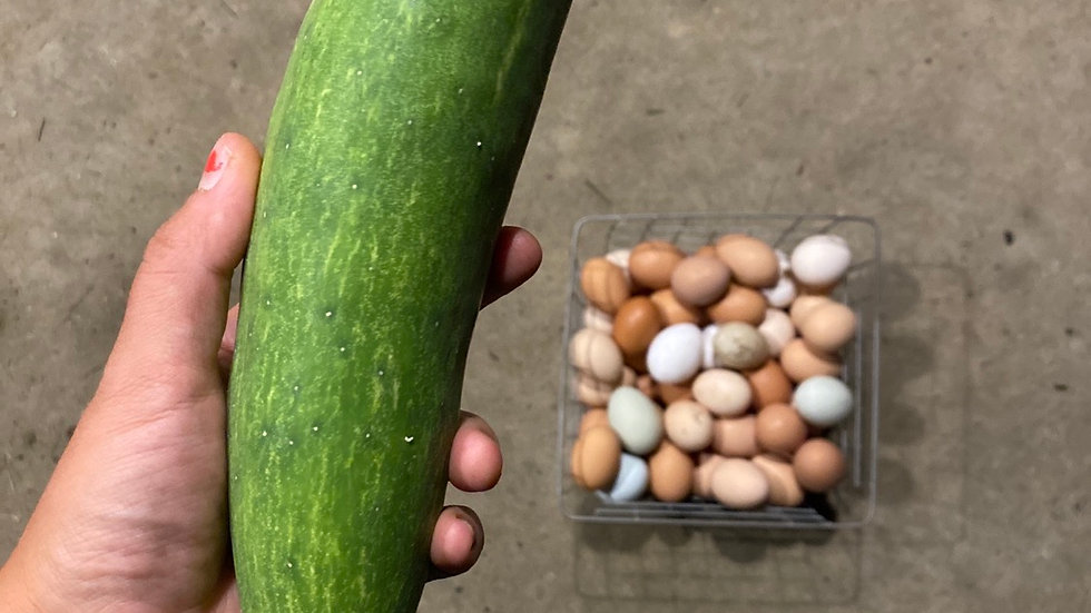 Burpless Cucumber 🥒