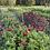 Thumbnail: Fresh Cut SUMMER Bouquet