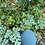 Thumbnail: 🍉 Sugar Baby Watermelon
