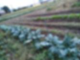 畑の写真.JPG