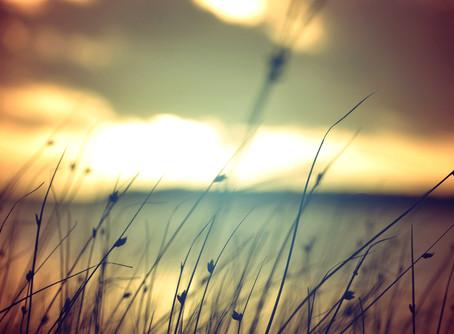 Nurturing Spirit in the Season of the Heart