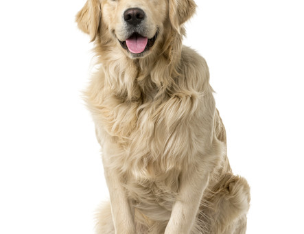 Year of the Yang Earth Dog