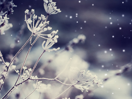 Spirit, Will & Destiny: Harnessing Your Power This Winter