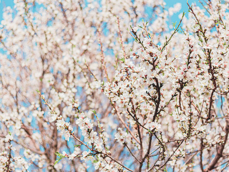 The Spirit of the Season: A TCM Perspective on Spring