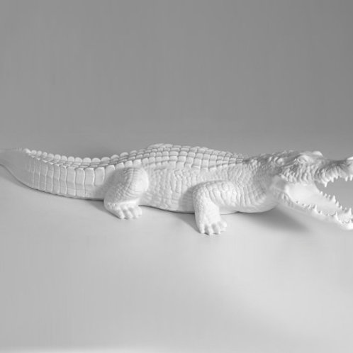 Krokodil   weiß hochglanz