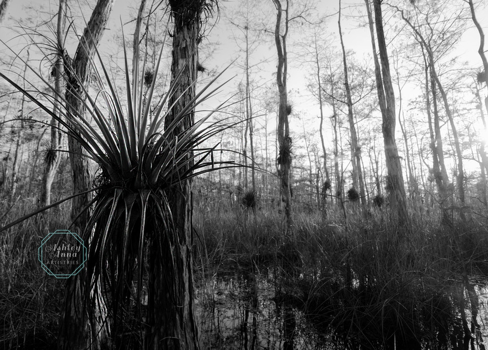 Everglades' Giants