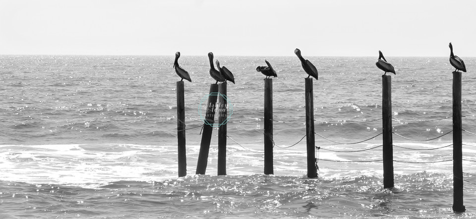 Outer Banks Pelicans