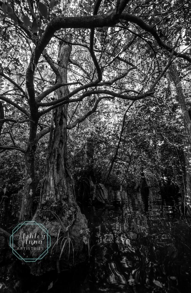 Swamp Limbs